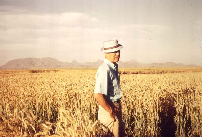 Norman Borlaug Amidst a Wheat Field