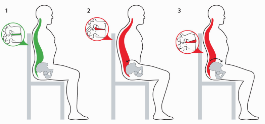 Spinal Flexion and Overextension (Source)
