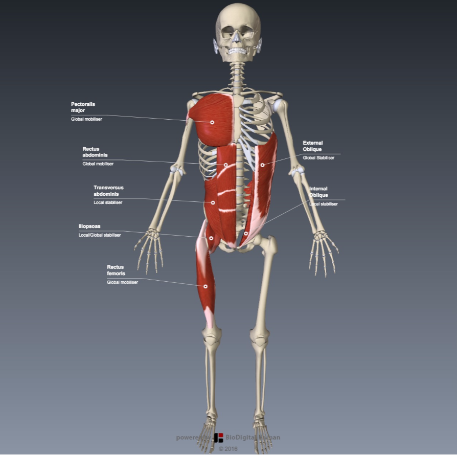 Functional Anatomy for Sports - The Anterior Kinetic Chain - The ...