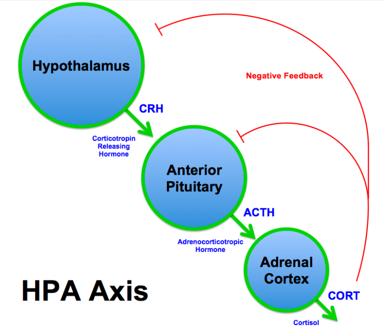 stress and Endurace sports HPA_Axis_Diagram_(Brian_M_Sweis_2012)